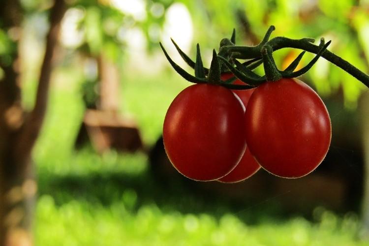 valor nutricional do tomate