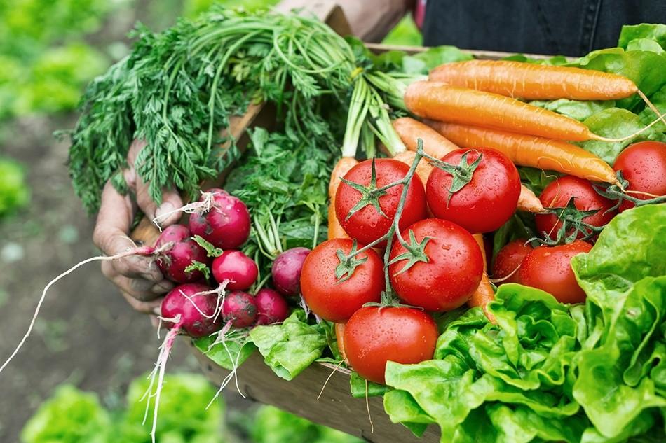 Como Cultivar Hortaliças em Casa