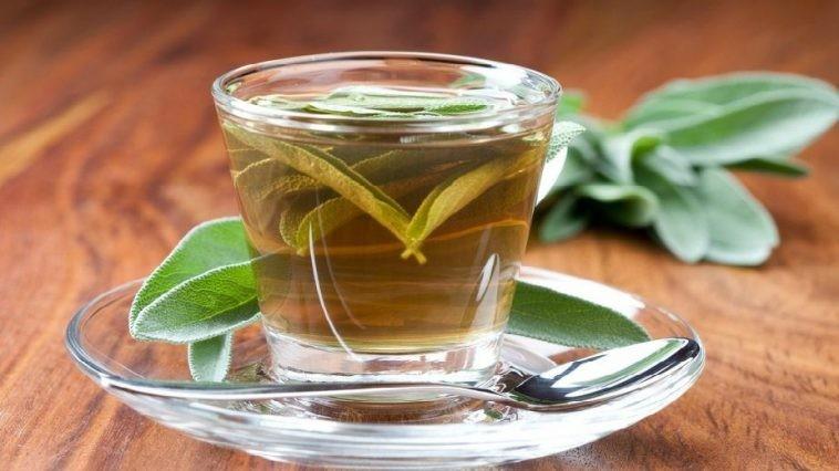 Chá de Louro