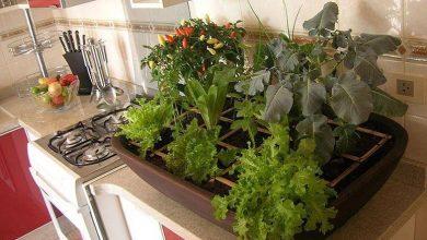 como cultivar planta em casa