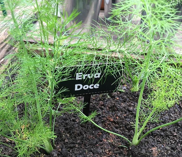 Como Plantar Erva Doce-sementes