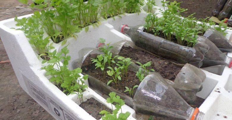 horta em casa simples
