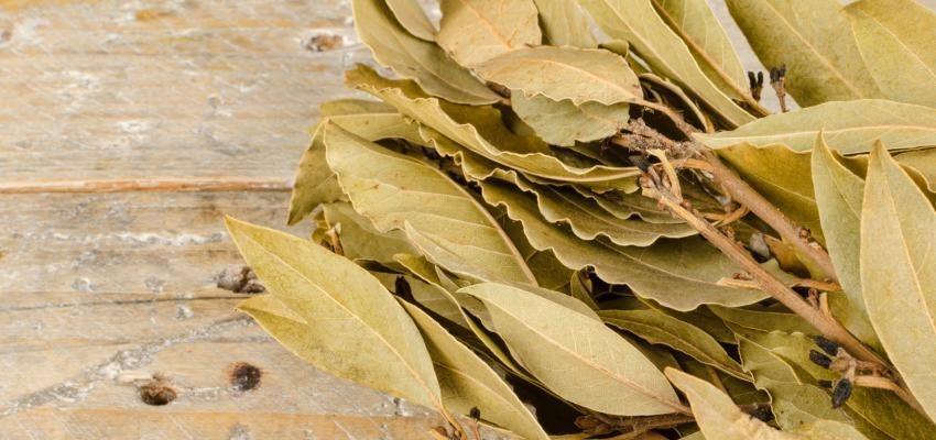 Folhas de louro secas