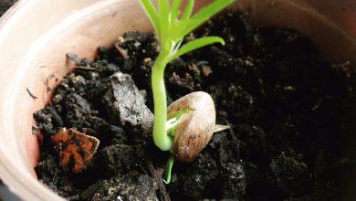 sementes germinadas
