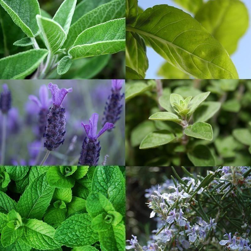 erros ao cultivar plantas aromaticas