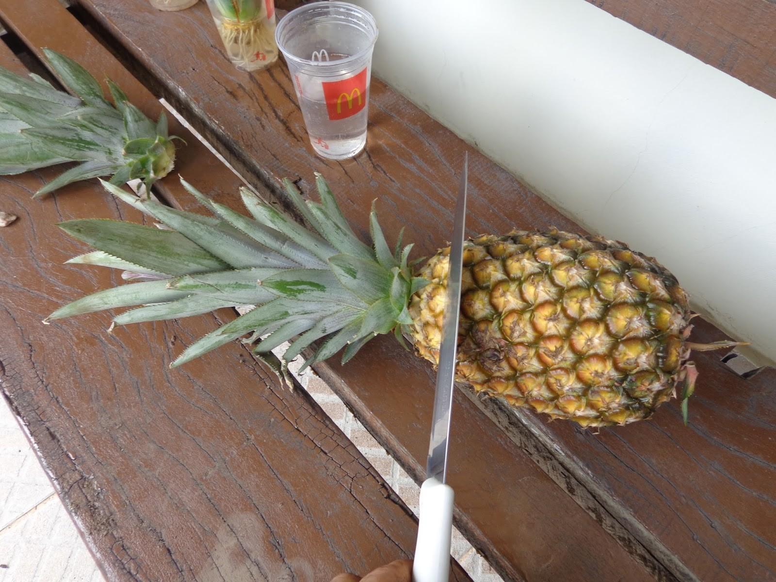 ananas como plantar