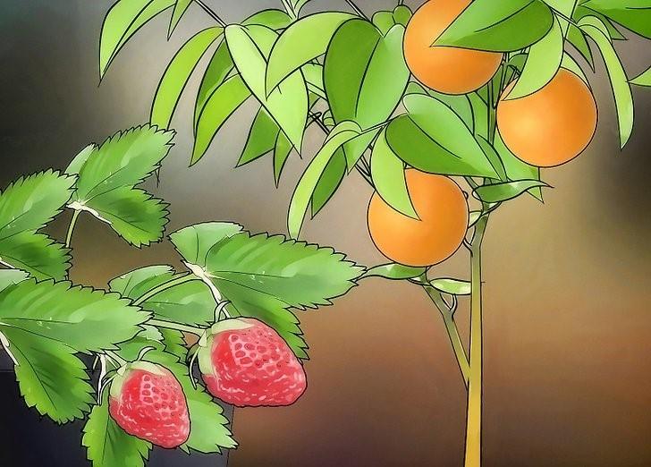 Como Plantar Frutas