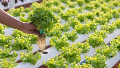 como plantar sem terra