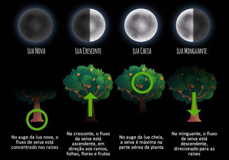 fase da lua para plantar