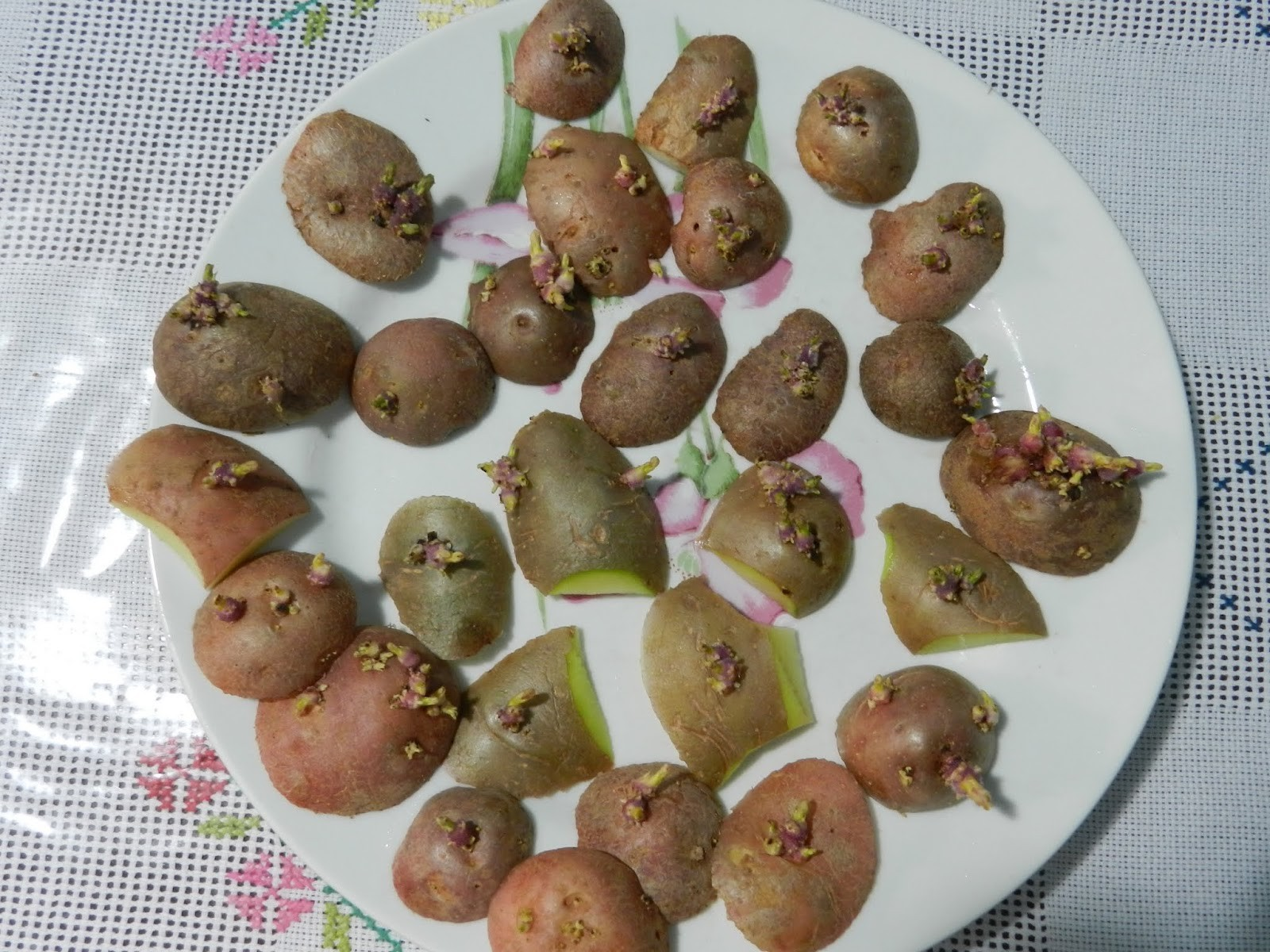 Como Cultivar Batatas