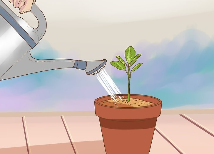 Como CultivarLaranja