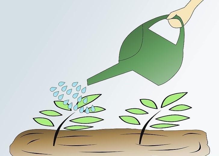 Como Plantar Pimenta Caiena