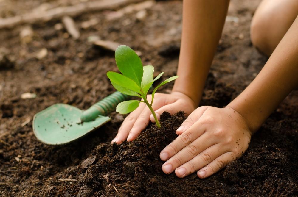 como plantar de acordo com o clima