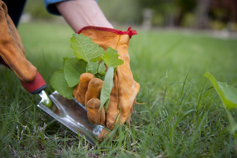 Como Controlar Ervas Daninhas