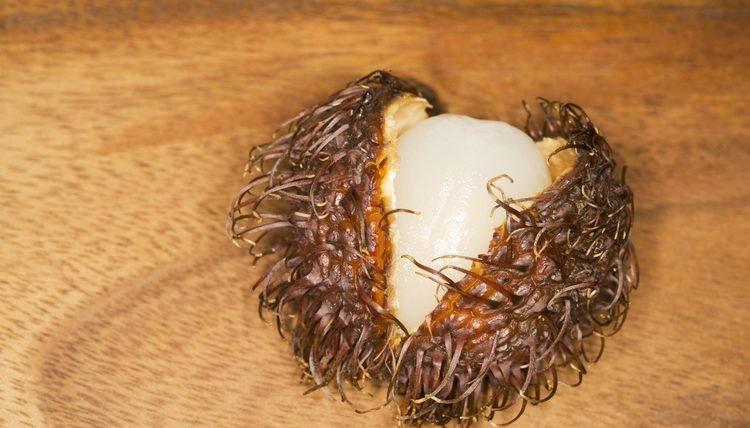 Como Plantar Semente de Rambutan