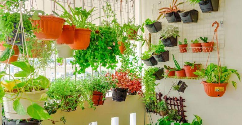 Melhores Legumes Para Plantar em Vasos