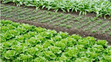 Melhores Alimentos Para Cultivar em Casa