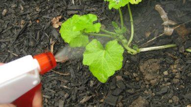 Pesticidas Naturais