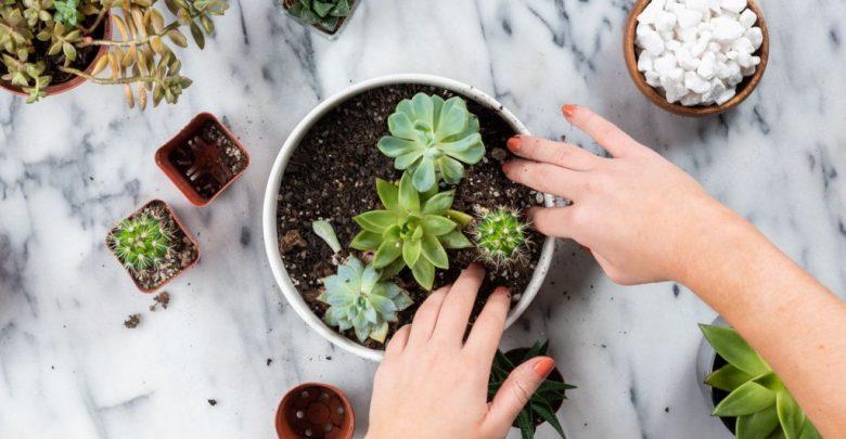 como plantar suculentas em casa