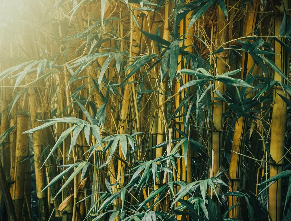 beneficios do bambu