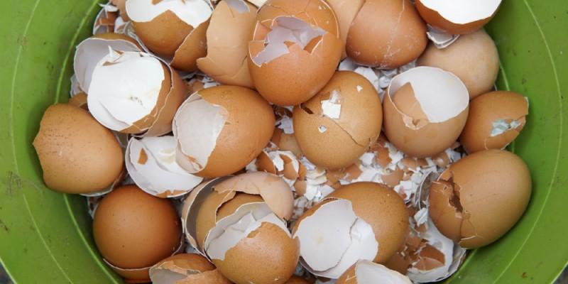 cascas de ovo para matar lagarta