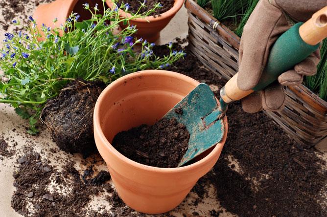 como adubar o solo de plantas e vegetais com nitrogenio