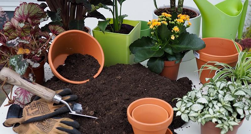 como adubar o solo de plantas e vegetais com potassio