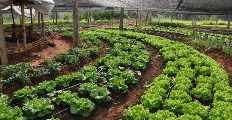 como cultivar hortaliça