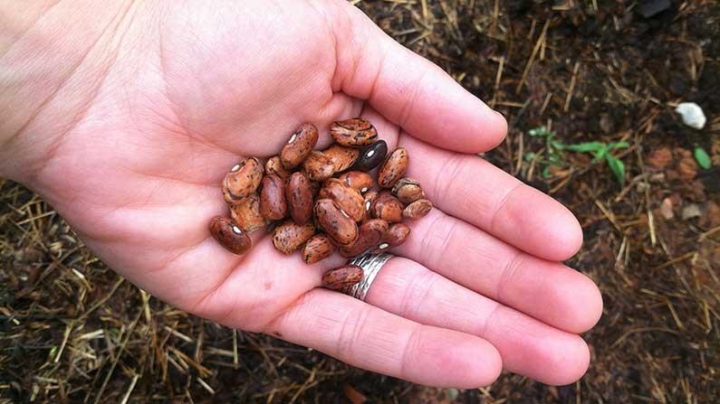 como cultivar sementes