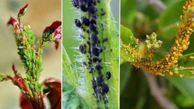como eliminar pragas das plantas