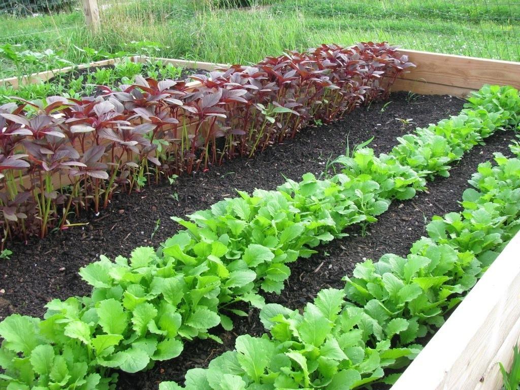 como fazer rotacao de culturas na horta