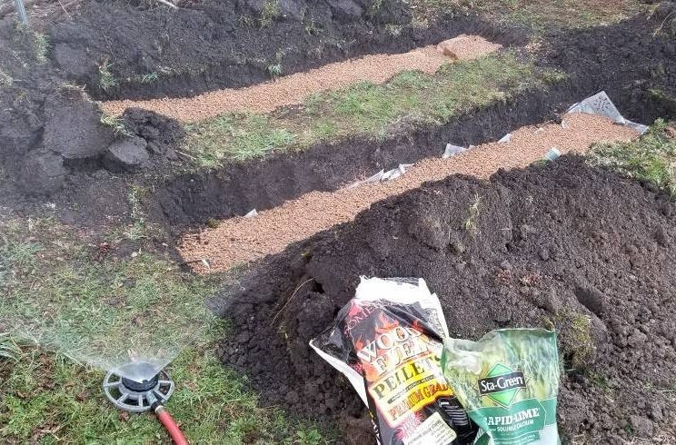 como plantar cogumelos morel