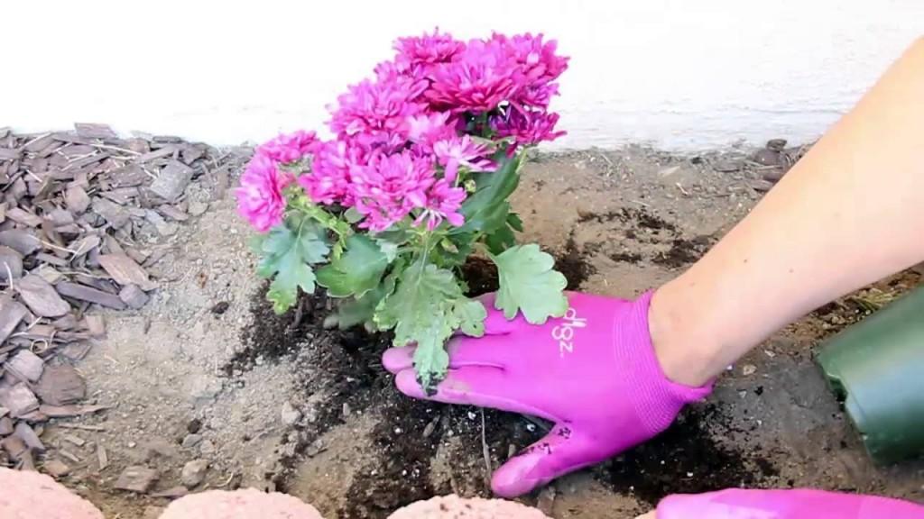como plantar flores em casa