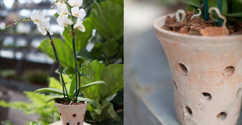 como plantar orquidea em vasos