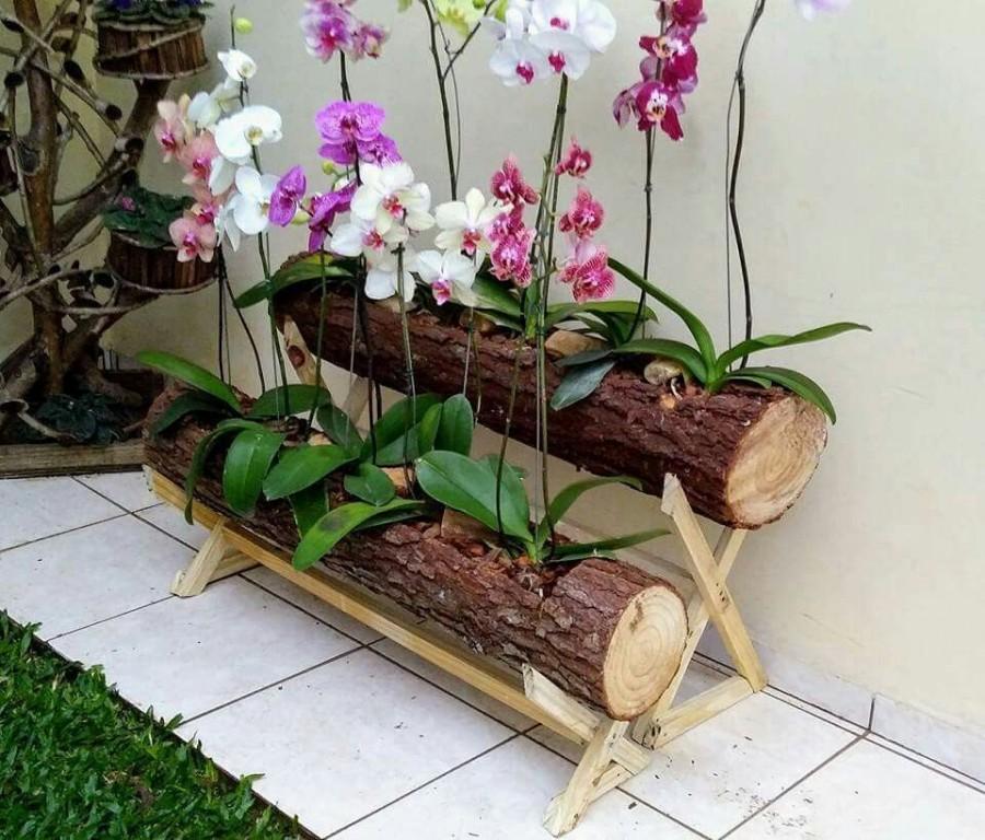 como plantar orquideas em casa