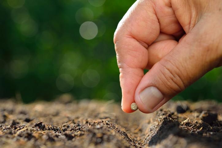 como plantar sementes de tangerina