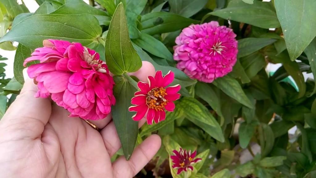 flores como plantar