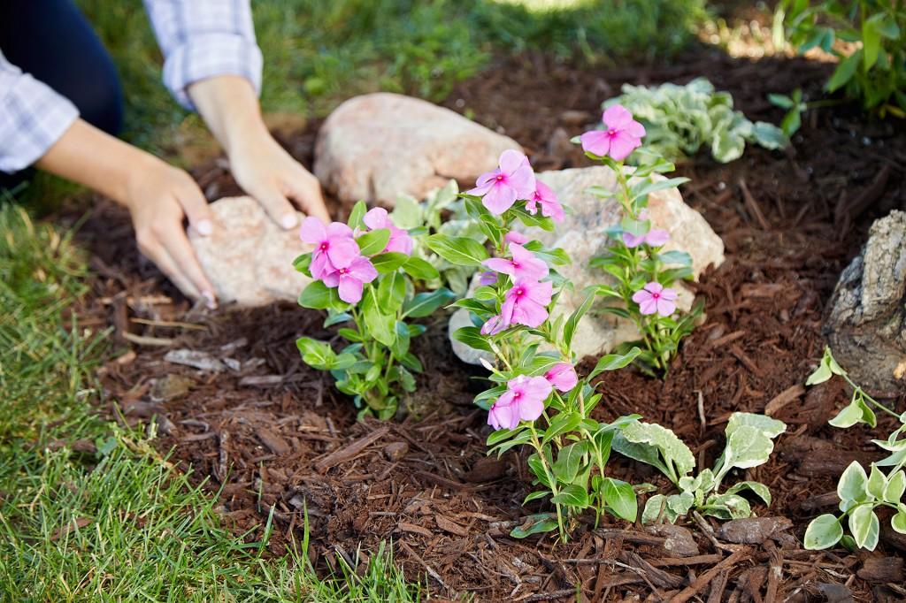flores cuidados adequado