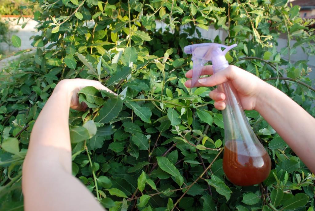 maneiras de como eliminar fungos da horta
