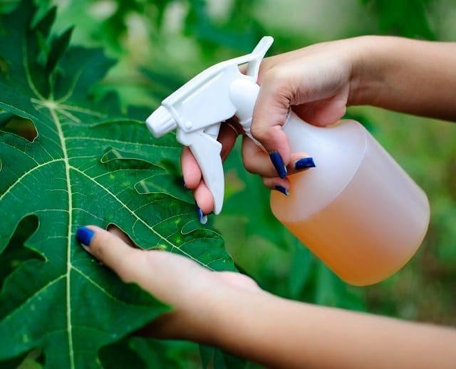 pesticida de tomate para eliminar lagarta