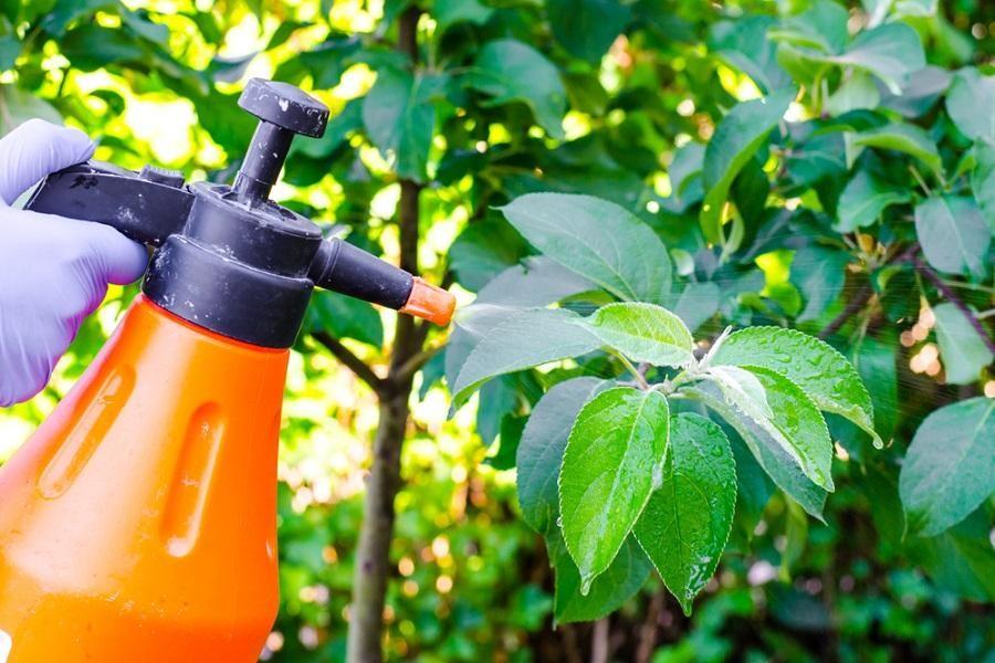 pesticida de urtiga para eliminar lagarta