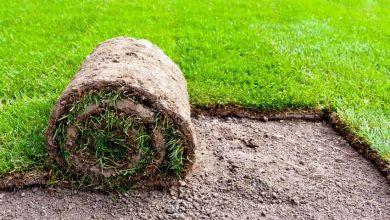 plantar grama em casa