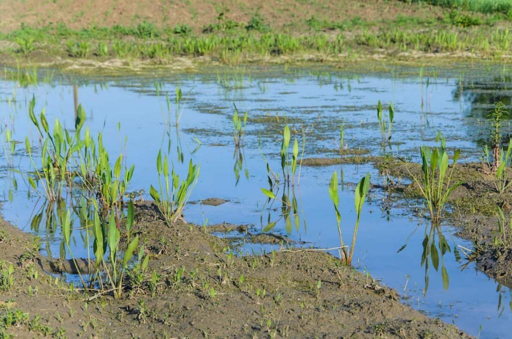 solo pantanosos