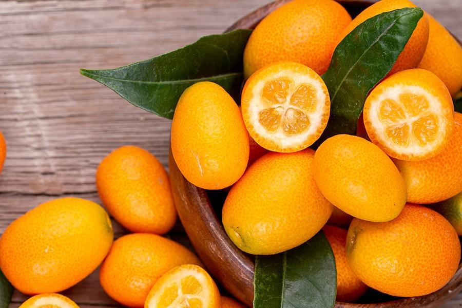Kumquat cultivo