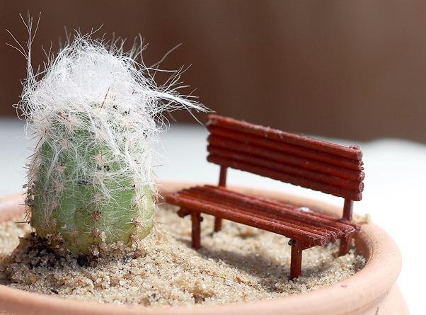 como plantar cacto velho