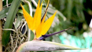 flor ave do paraiso